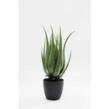 Kare Design Deko Pflanze Aloe 69cm
