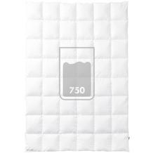 Kauffmann Einziehdecke Premium Bettdecke 135 x 200 cm
