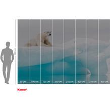 Komar Adventure Arctic Polar Bear 400 x 280 cm