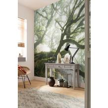"""Komar Digitaldruck Fototapete auf Vlies """"The Forgotten Forest"""" 400 x 250 cm"""