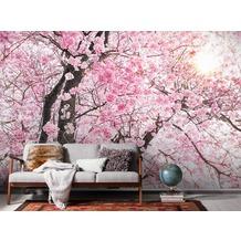 "Komar Digitaldruck Vliestapete ""Bloom"" 400 x 250 cm"