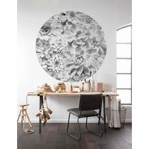 Komar Echeveria 125 x 125 cm Fototapete Dots