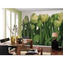 Komar Fototapete Tulips 368 x 254 cm