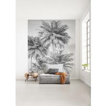"Komar home Vlies Fototapete ""Cocco"" 200 x 250 cm"