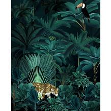 "Komar home Vlies Fototapete ""Jungle Night"" 200 x 250 cm"