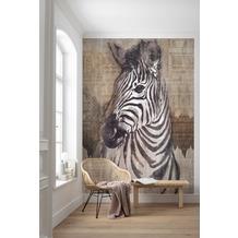 """Komar home Vlies Fototapete """"Zebra"""" 200 x 250 cm"""