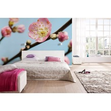 Komar Vlies Fototapete munich design book - Peach Blossom 350 x 250 cm