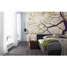 Komar Vlies Fototapete munich design book - Sunshine 250 x 250 cm