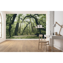 """Komar Vlies Fototapete """"Ancient Green"""" 450 x 280 cm"""