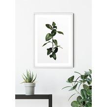 Komar Wandbild Ficus Branch 30 x 40 cm
