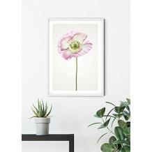 Komar Wandbild Poppy 30 x 40 cm