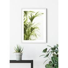 Komar Wandbild Reed Leaves 30 x 40 cm