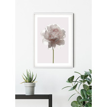 Komar Wandbild Rose 30 x 40 cm