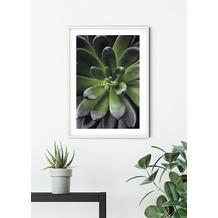 Komar Wandbild Succulent Single 30 x 40 cm