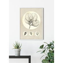 Komar Wandbild Transparent Leaf 30 x 40 cm