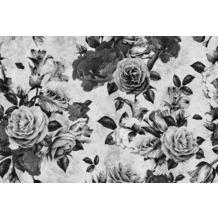 Livingwalls Fototapete Walls by Patel Rosentapete Spanish Rose grau schwarz Vliestapete glatt 4,00 m x 2,70 m