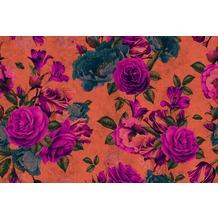 Livingwalls Fototapete Walls by Patel Rosentapete Spanish Rose orange violett Vliestapete glatt 4,00 m x 2,70 m