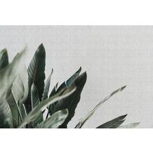Livingwalls Fototapete Walls by Patel Tapete mit Blättern Urban Jungle grau grün Vliestapete glatt 4,00 m x 2,70 m