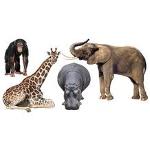 Apalis Wandtattoo mehrfarbig No.406 African Safari Set 110x56 cm 110x56cm