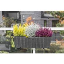 merxx Blumenkasten schwarz, 60x19x19 cm