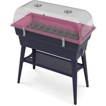 NOOR Hochbeet Calipso 81x38x100cm Komplettset mit Haube Farbe rosa