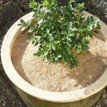 NOOR Kokosscheibe Durchmesser 25 cm