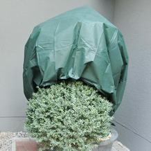 NOOR Wintervlies 34g/m² 1,6 x 5m grün