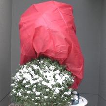 NOOR Wintervlies 34g/m² 1,6 x 5m rot