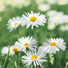 Paper+Design Servietten Tissue Full of daisies 25 x 25 cm 20er