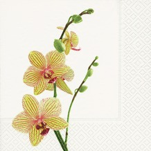 Paper+Design Servietten Tissue Yellow orchid 33 x 33 cm 20er