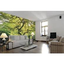 papermoon Fototapete 7 Bahnen, Digitaldruck Japanese Maple Tree, Tapetenbahn 50cm, Spezial Tapetenpapier, BlueBack 350 x 260 cm