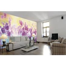 papermoon Fototapete 7 Bahnen, Digitaldruck Lavender Flower, Tapetenbahn 50cm, Spezial Tapetenpapier, BlueBack 350 x 260 cm