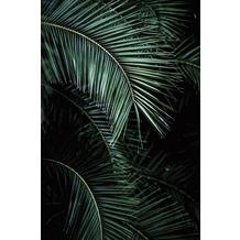 Rasch Digitaldrucktapete Young Artists Wandbild 100990 grün, schwarz