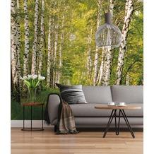 "Sunny Decor Fototapete ""Birkenwald"" 368 x 254 cm"