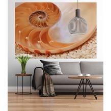 """Sunny Decor Fototapete """"Nautilus"""" 184 x 127 cm"""