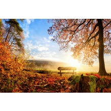XXLwallpaper Fototapete Autumn Morning 150 g Vlies Basic 2,00 m x 1,33 m