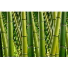 XXLwallpaper Fototapete Bambus 2 150 g Vlies Basic 2,00 m x 1,33 m