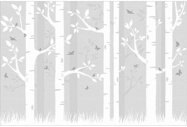 bilderwelten vliestapete holz birkenwald mit schmetterlingen und v gel fototapete breit. Black Bedroom Furniture Sets. Home Design Ideas
