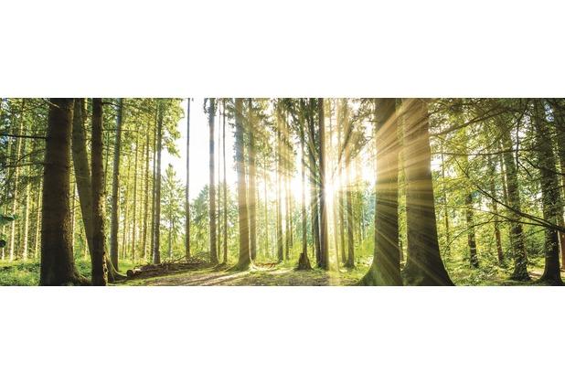 Bönninghoff Kunstdruck gespannt auf Keilrahmen, grüner Wald