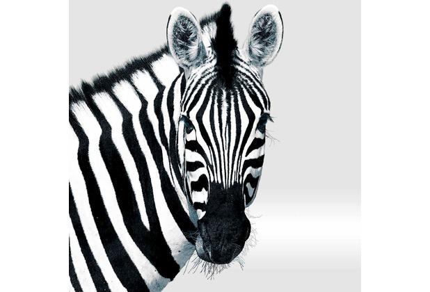 Duni Servietten Tissue Zebra 33 x 33 cm 20 St.