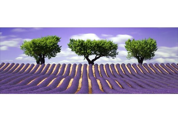 Glas-Art Floatglas Bild Lavendelfeld 80 x 30 cm