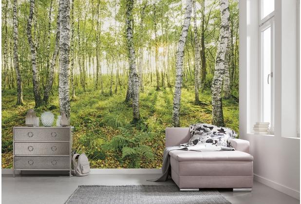 "Komar Digitaldruck Vliestapete \""Birch Trees\"" 400 x 250 cm"
