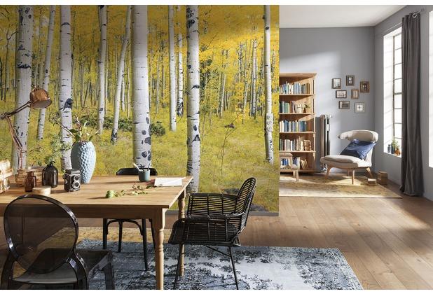 "Komar Digitaldruck Vliestapete \""Orange Forest\"" 400 x 250 cm"