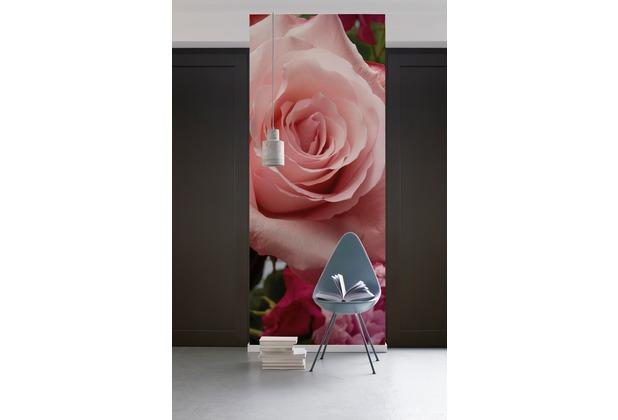"Komar Digitaldruck Vliestapete \""Rosenduft\"" 100 x 280 cm"