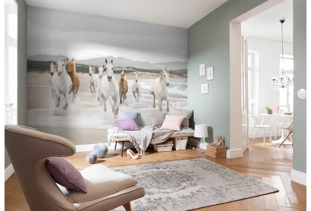 Komar Fototapete White Horses 254 x 368 cm