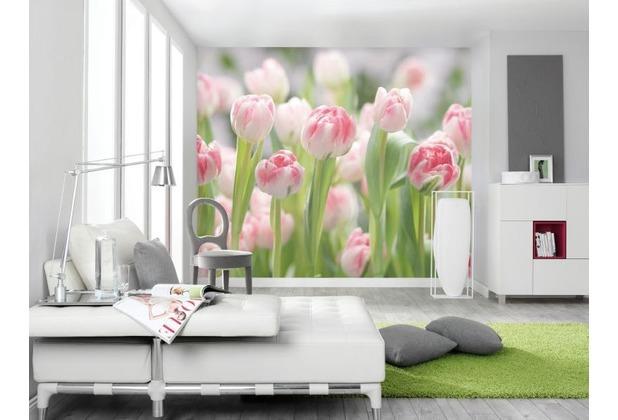 Komar Fototapete Secret Garden 368 x 254 cm