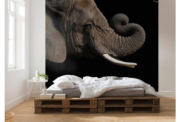 Komar National Geographic African Elephant 300 x 280 cm