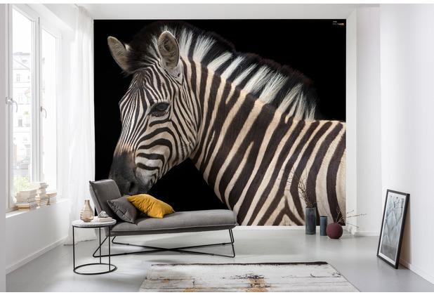 Komar National Geographic Damara Zebra 400 x 280 cm