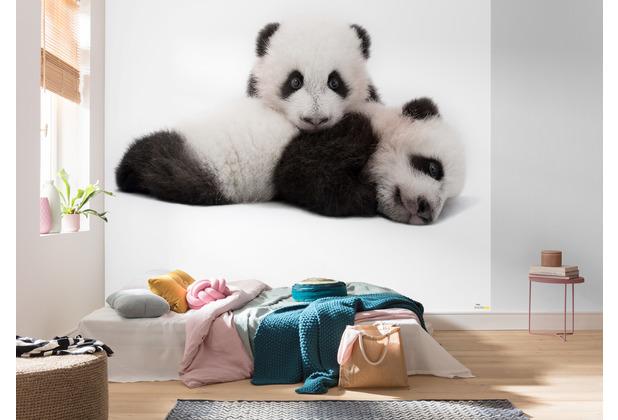 Komar National Geographic Giant Panda 300 x 280 cm