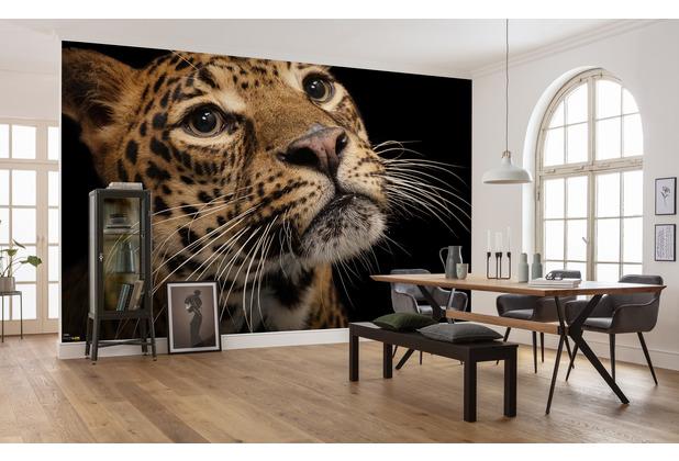 Komar National Geographic Javan Leopard 400 x 280 cm